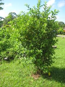 Suriname I 041